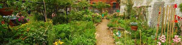 Wide shot of a community garden